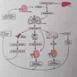 Terapi Hipertensi dengan tahitian noni